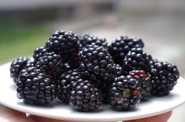 Fresh blackberries to make tea